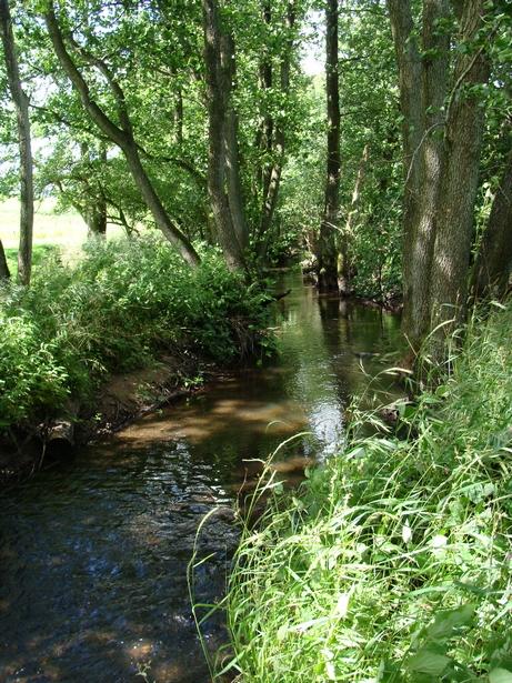 Stemningsbillede fra åen